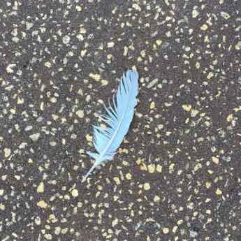Image of a Feather - Follow Psychic Medium and Mentor @LindsayMarinoMedium on Instagram